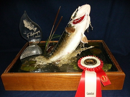 Ontario taxidermy tim steen taxidermist in canada for Fish taxidermy prices
