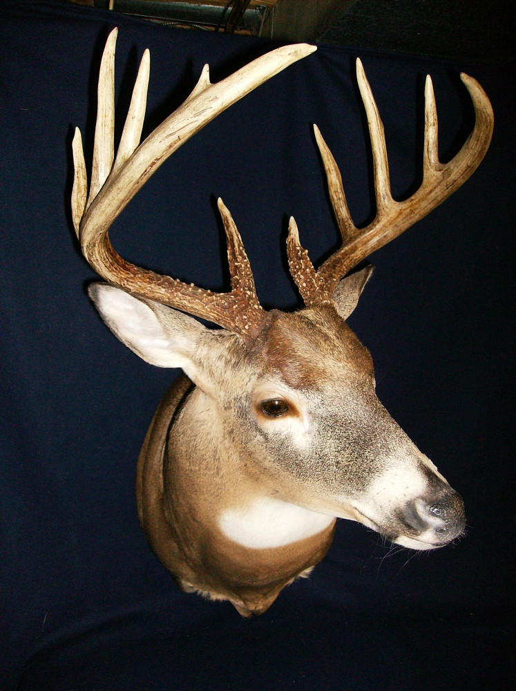 how to become a taxidermist in canada
